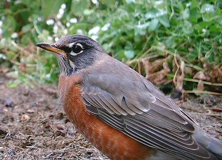 Birdcamamro_2
