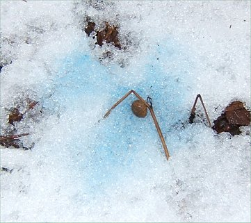 Blue Pee 116