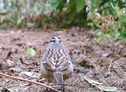 Birdcamfeel